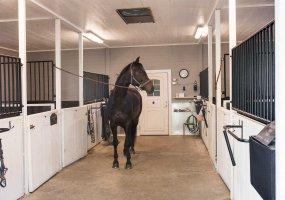 Stall – Hästen ryktas